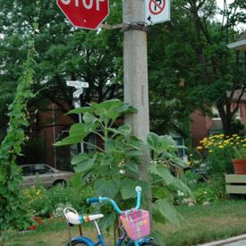 Ambridge Pennsylvania hit-and-run: SUV takes out little girl on bike