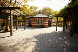 New York City premise liability: 6-month-old killed by falling branch at park