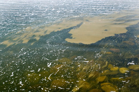 Ohio water pollution: Grand Lake St. Marys plagued with toxic algae blooms
