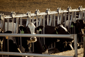 U.S. FDA seeks injunction against Scenic View Dairy