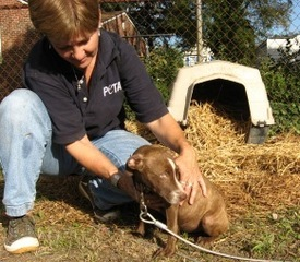 95% of Animal's in PETA's Shelters are Euthanized