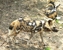 Boy, 3, Falls Into Wild African Dog Exhibit at Pittsburgh Zoo; Mauled to Death